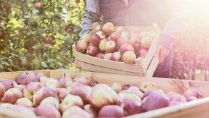Bio Lebensmittel ohne Pestizide